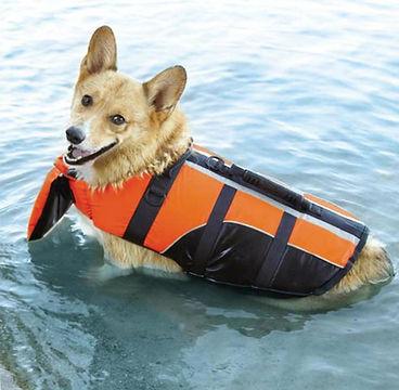 Dog_Life_Jacket.jpg