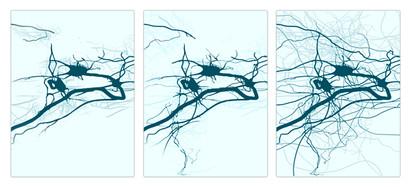 Nieuwe neurale paden