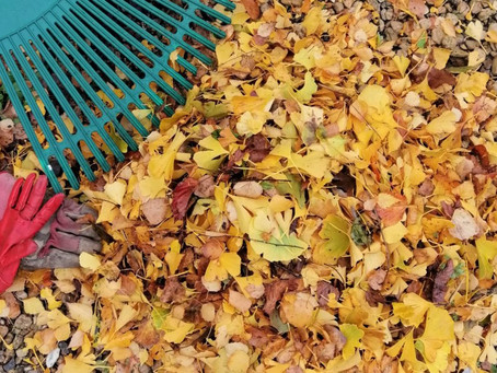 Autumn Leaves - How to make leaf mould.