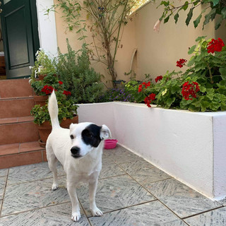 Twin house Spetses dog1.jpg