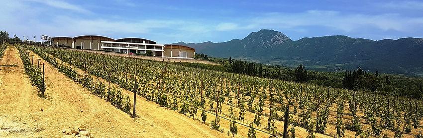 Wandeling 2 - Banner 04 Nestor Winery.jp