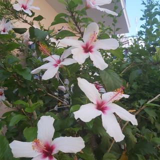 Twin house Spetses garden 2.jpg
