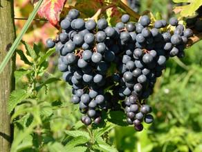 Open dagen en kunst in wijngaard Domein de Vier Ambachten
