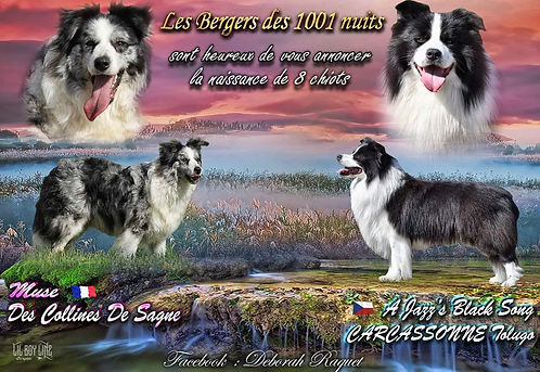 les-bergers_des-1001-nuits-border-.jpg