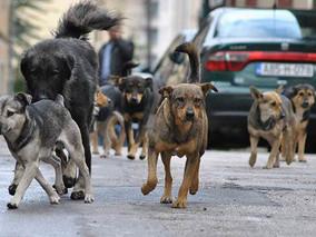 Grad slučaj: I pse ubijaju, zar ne! (Marin Bago)