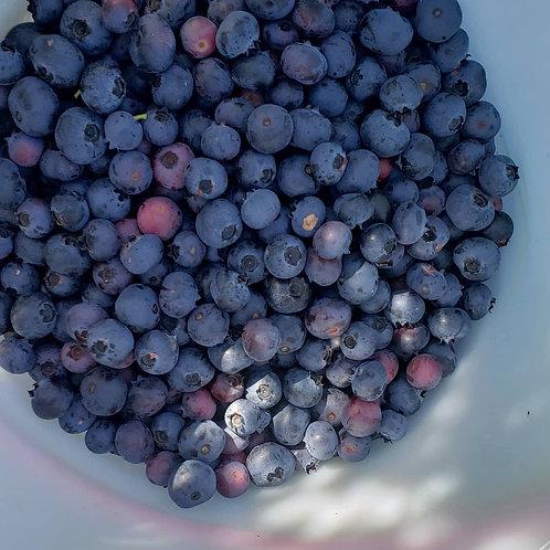 Blueberry Jam - 8oz