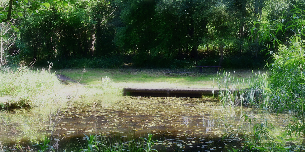Introduction to Mindfulness w/ Rosca Holistic Health