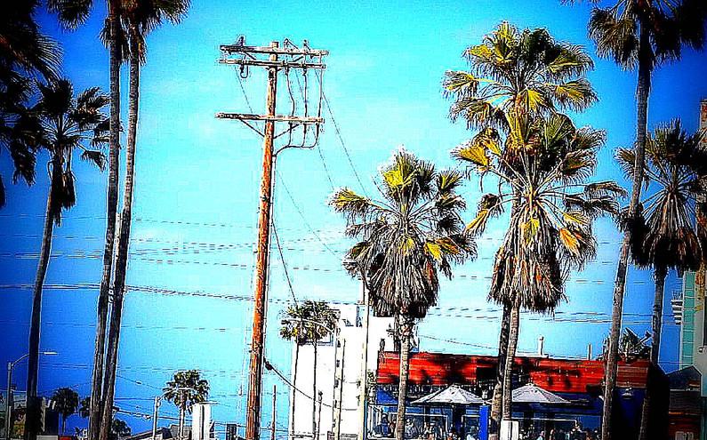 Palm Trees & a Cool Breeze