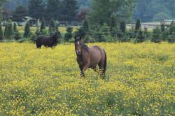 Horses+June+5,+2011+022.JPG