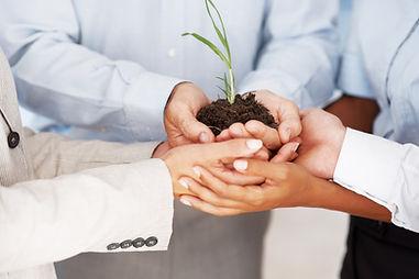 Personen halten gemeinsam eine Pflanze in den Händen