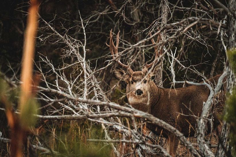 Mule-Deer-Trip-42.jpg