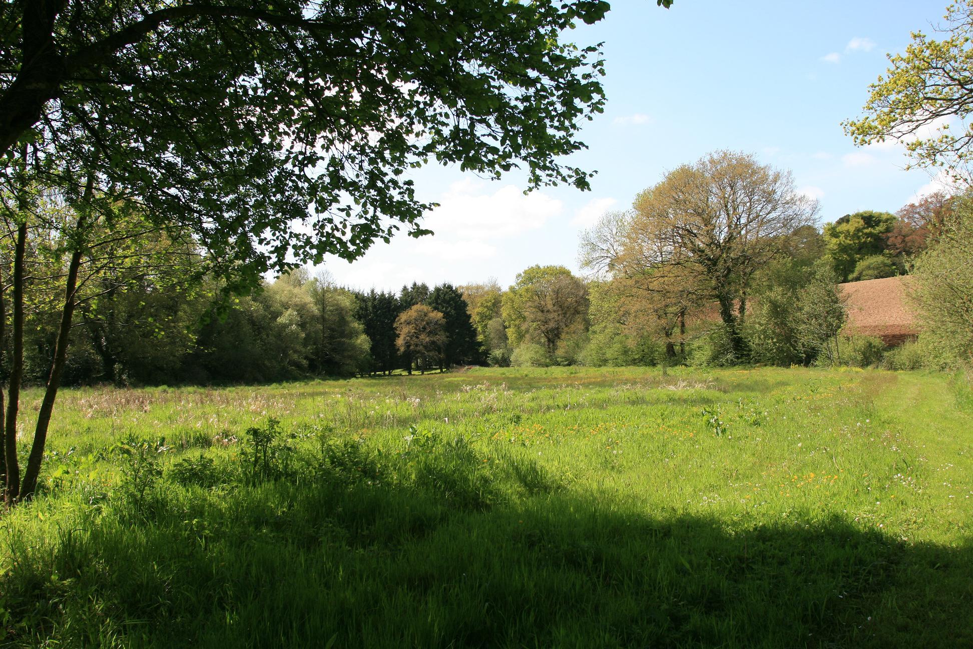 champs et arbres au printemps