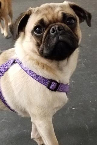 Meet Iggy!