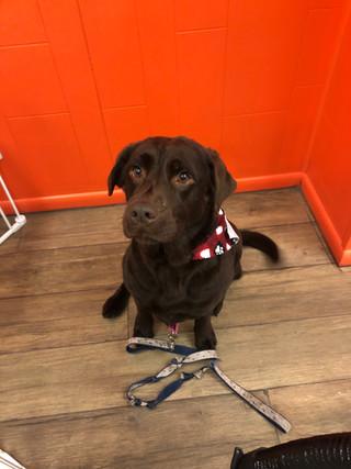 Meet Athena!