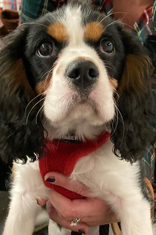 Meet Wilbur!
