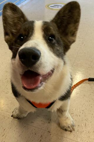 Meet Fauci!
