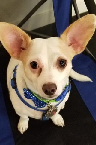 Meet Bobby!