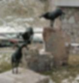 Bighorn Sheep at Navigators