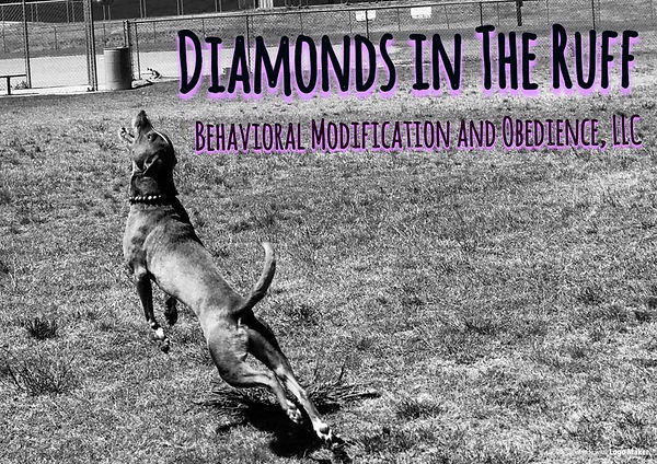 Diamonds in the Ruff Behavioral Modification and Obedience, LLC.
