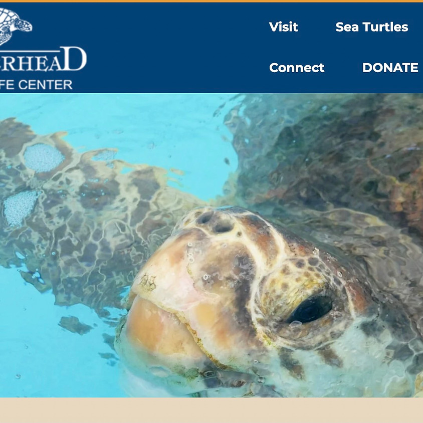 See Your Impact - Loggerhead Marine Life Center - Blueprint for Healthier Waters