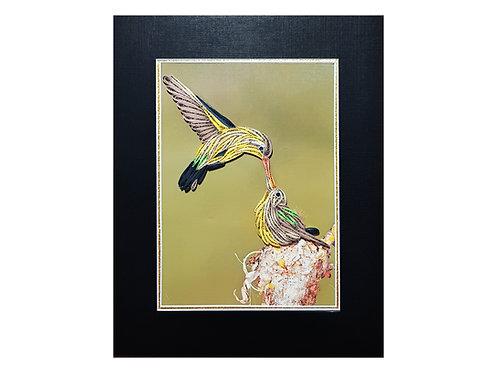 Hummingbird Mom Feeding A Baby