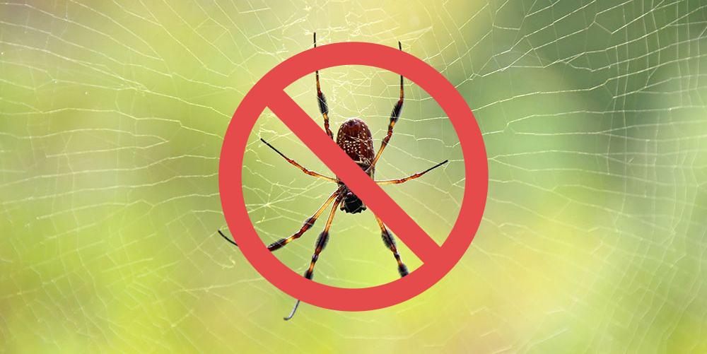 En spindel med en röd markering