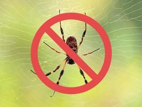 5 Tips För Att Bli Av Med Spindlar Och Andra Insekter