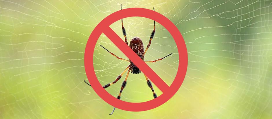 5 tips för att bli av med spindlar
