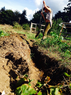 Swale digging!