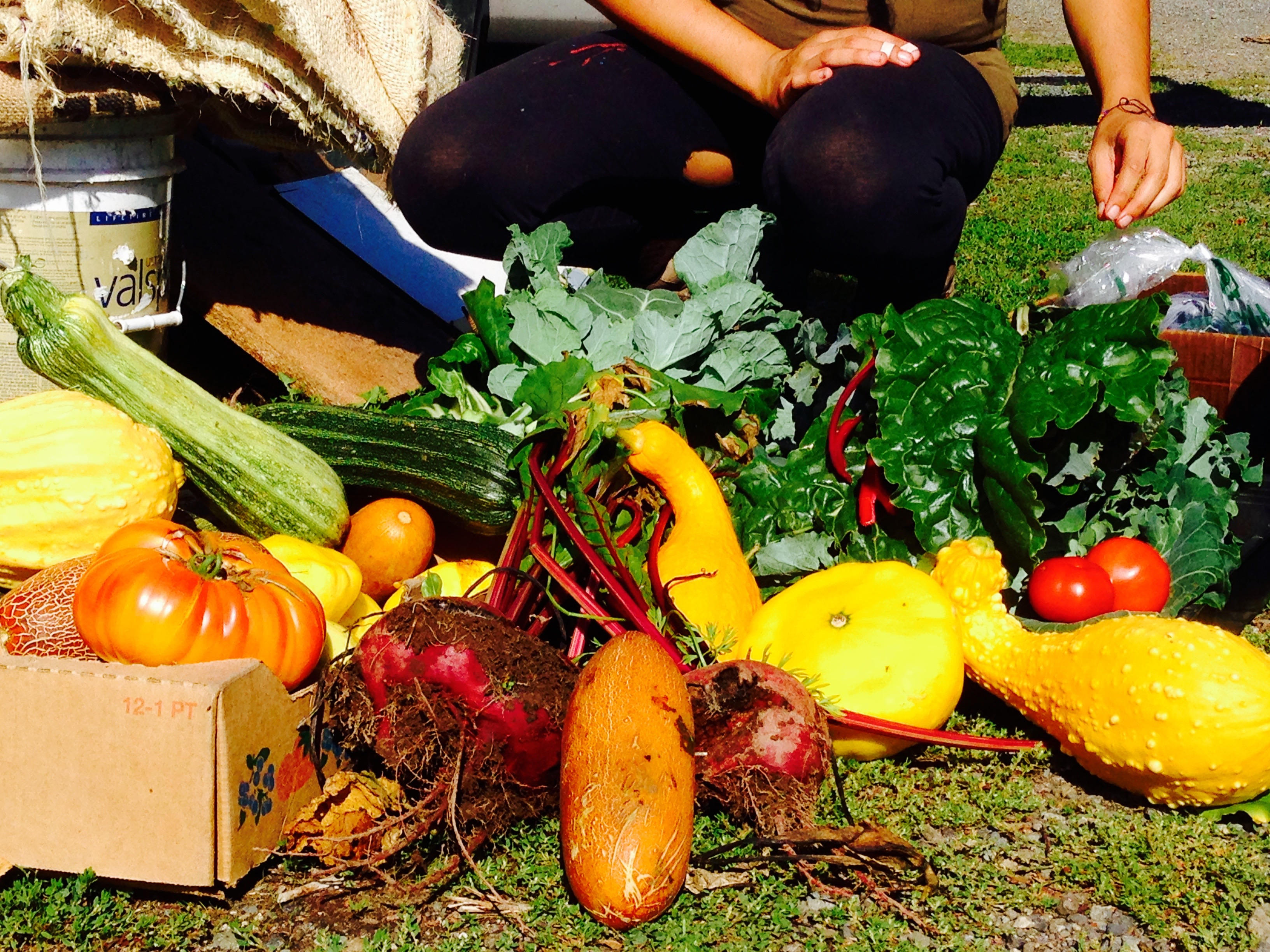 Abundance! Our harvest!