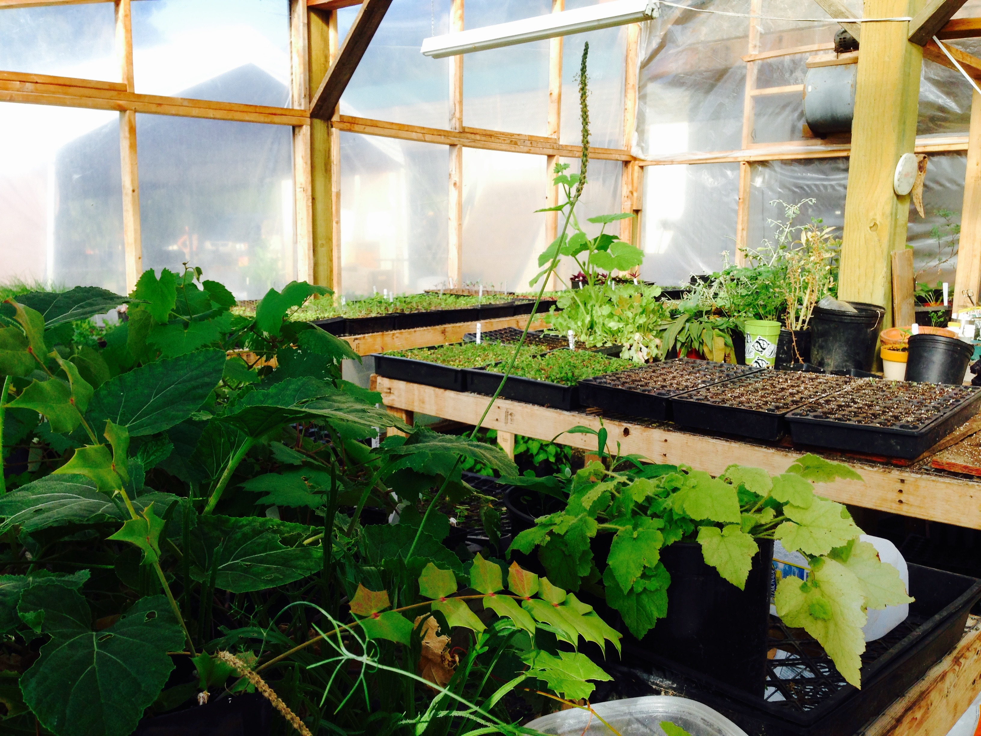 Inside the greenhouse!