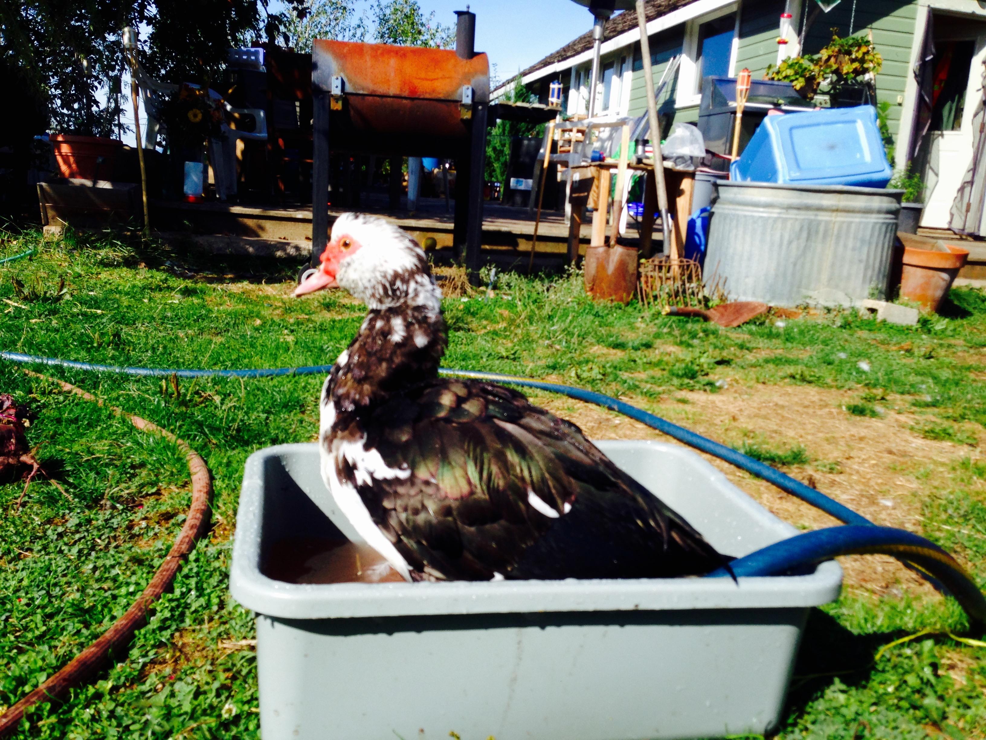 Duckbath!