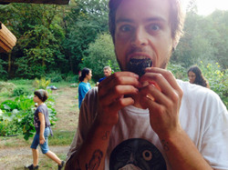 Joey eating a roasted sunflower!