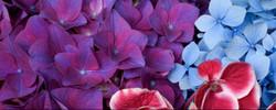 Excellent-Purple-Red-Blooming-Flowers_edited.jpg