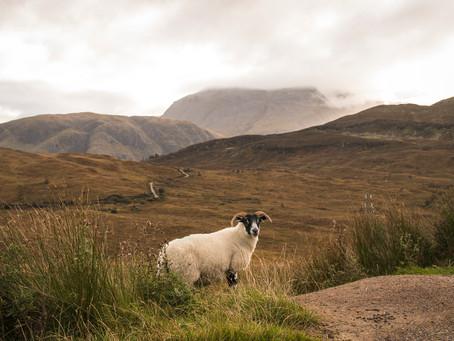 The Highlands 2019