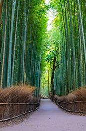 Arashiyama mountain Kyoto Japan famous l