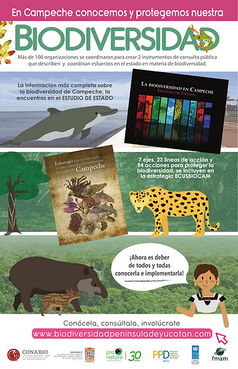 CAMPECHE_ LIBROS.png