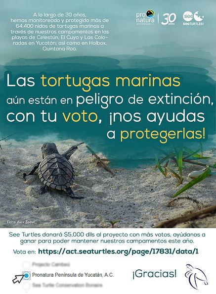 CAMPAÑA TORTUGAS2__.jpg