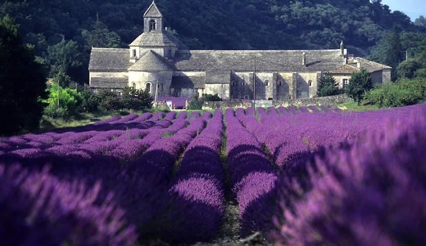 Lavenders, wine and hilltop Village