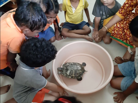 Learning about the Turtle on Pet Day