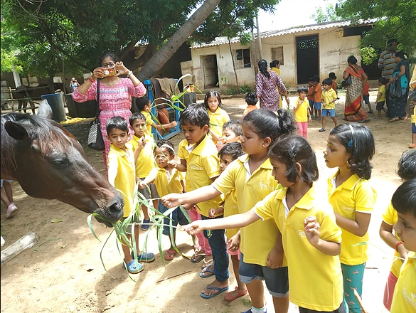 Feeding a Horse at The Farm