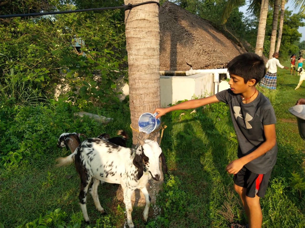 Bonding with livestock