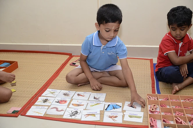 Learning the names of Insects