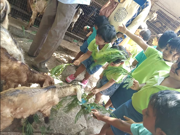 Learning to feed goats at The Farm, OMR.