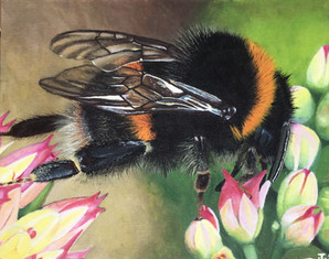"""""""Bee and Flowers"""""""