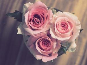 22ee5-rose-3072698_1920.jpg