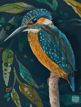 illustration watercolour loddelina editorial nature kingfisher