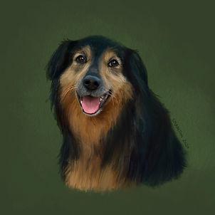 pet portrait digital illustration dog
