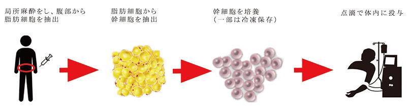 幹細胞フローJP.jpg