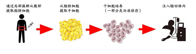 幹細胞フロー.jpg